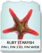 Ruby Starfish