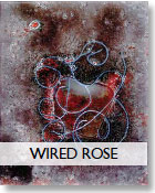 Wired Rose